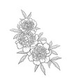 Beautiful monochrome black and white bouquet peony vector image