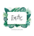 summer tropical background with exotic palm leaves vector image