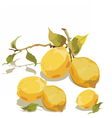 Fresh lemon branch with leaves vector image