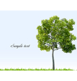Summer landscape with sky green grass and tree vector image