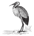 White Stork vintage engraving vector image vector image