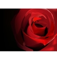 Red rose on black vector image