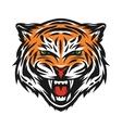 Aggressive tiger face vector image