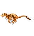 Cute cheetah running vector image