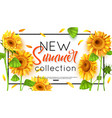 new summer collection with sunflower for banner vector image