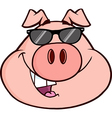 Cartoon pig with glasses vector image