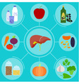 Infographics of food helpful for healthy liver vector image