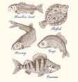 design graphic set with fish vector image
