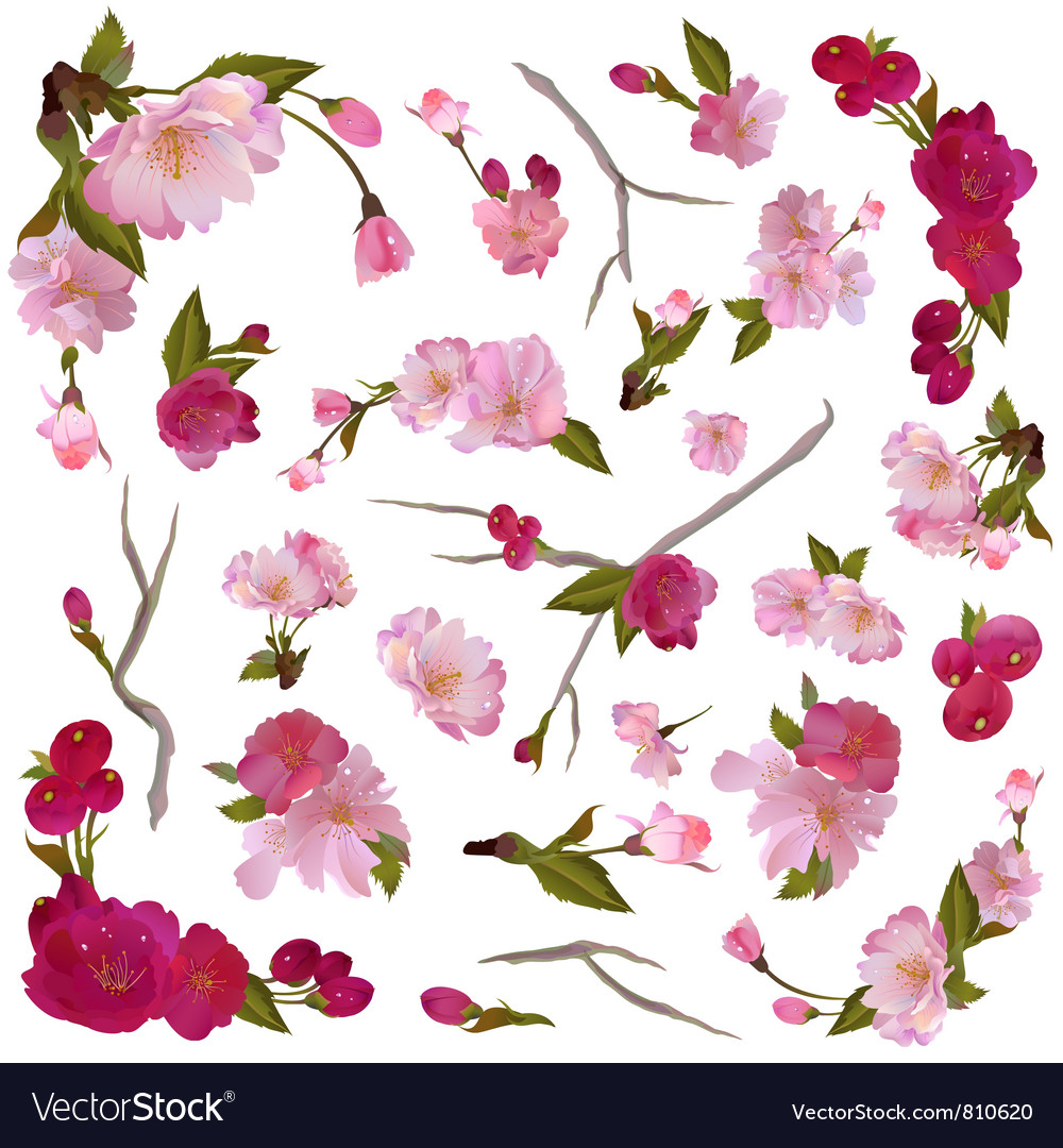 Set of isolated spring flowers and branches vector