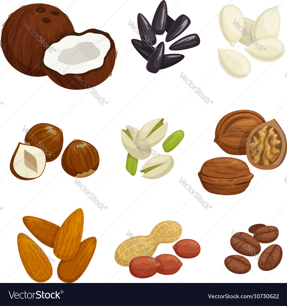 Nuts grain and kernels icons vector
