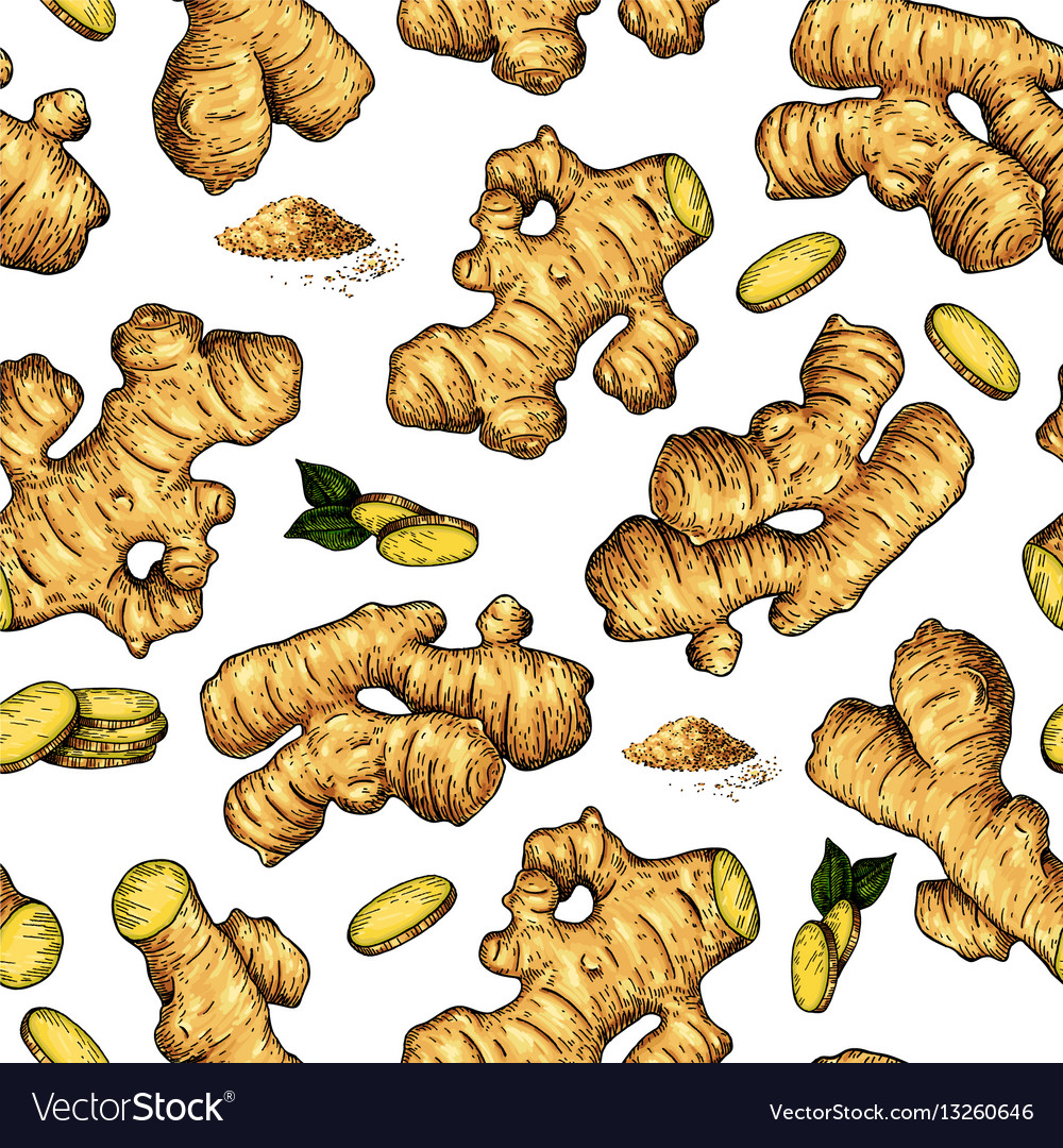 Ginger seamless hand drawn pattern root vector