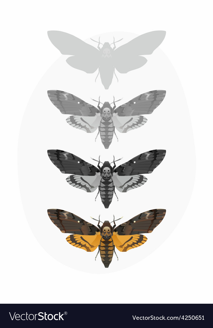 Butterfly deaths head hawk moth set vector