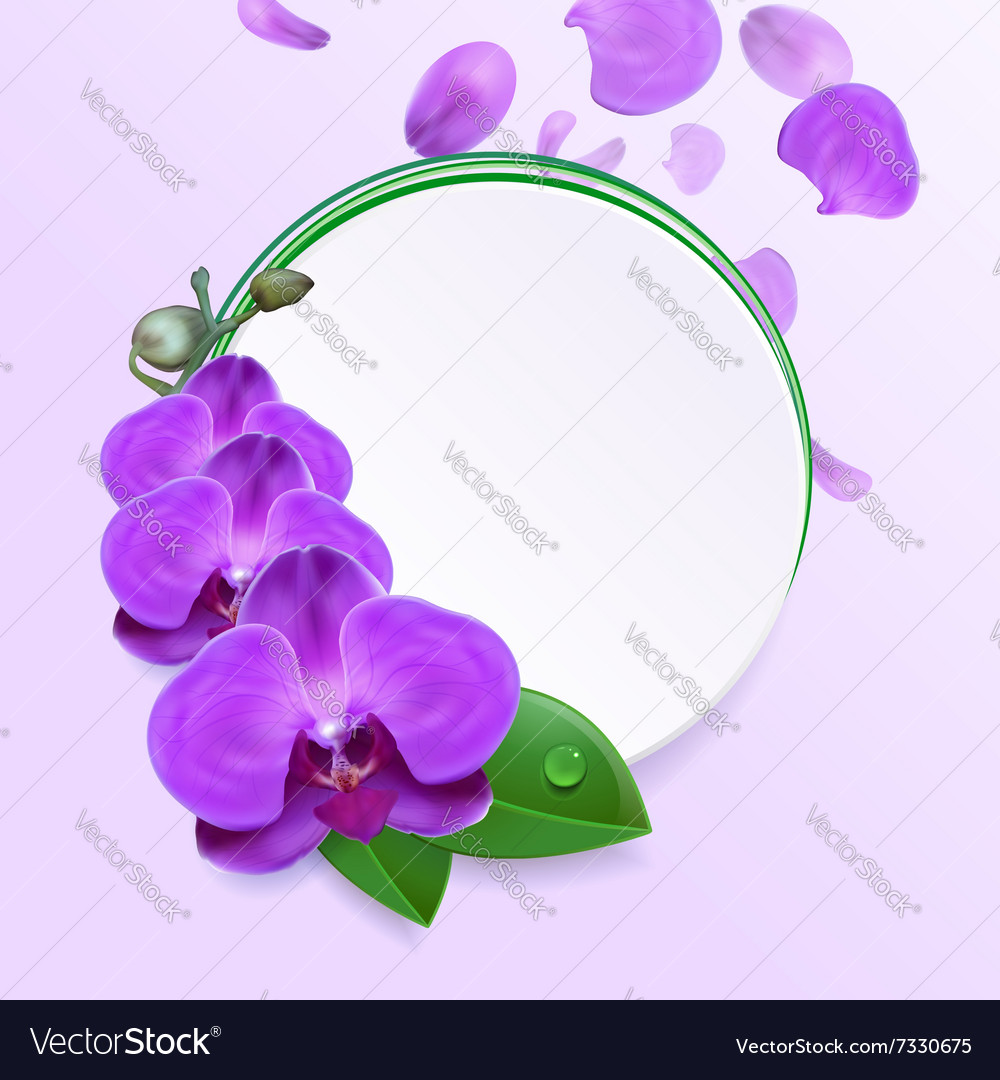 Banner with purple orchids vector