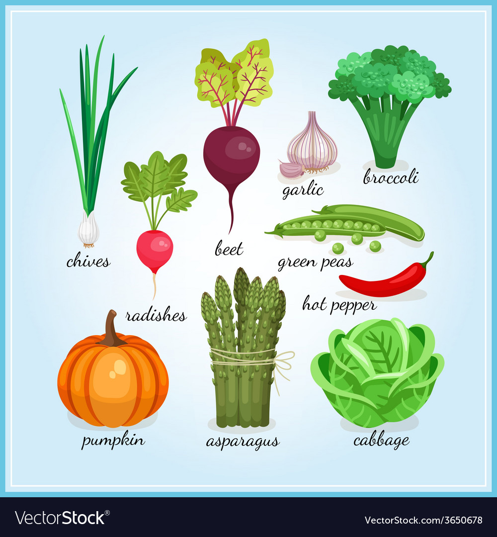 Healthy fresh vegetables icons vector
