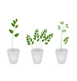 Beautiful Green Ferns in Tree Flower Pots vector image vector image