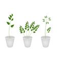 Beautiful Green Ferns in Tree Flower Pots vector image