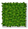 Green leaves texture vector image vector image