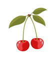 white background with colorful realistic cherries vector image