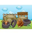 Two Orangutans near the big rocks vector image vector image