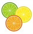 Colorful citrus slices set vector image