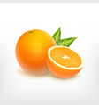 orange fruit and orange slice vector image