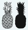 Ripe tasty pineapple vector image