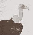 vintage vulture vector image