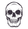 cartoon human skull vector image