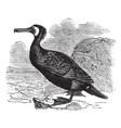 Great Cormorant vintage engraving vector image vector image