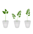 A Set of Evergreen Plant in Flower Pots vector image