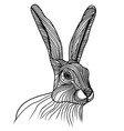 Rabbit or hare head animal for vector image
