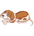 Brown dog on white background vector image vector image
