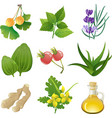 herbal medicine vector image vector image