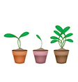 Brussels Prouts Plants in Ceramic Flower Pots vector image