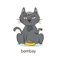 Bombay cat Cat character isolated on white vector image