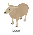 sheep icon isometric style vector image