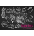 Fruits chalk sketch icons on blackboard vector image