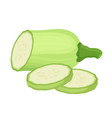 fresh zucchini squash cartoon flat style vector image
