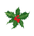 Holly berry christmas icon vector image