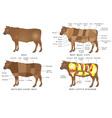 Beef chart vector image