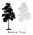 Acacia tree silhouette contours and inscriptions vector image vector image