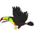 Cute cartoon toucan bird flying vector image