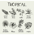 Hand drawn vintage retro sketch tropical plants vector image