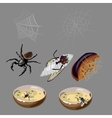 Flies spiders rotten food and insects vector image
