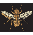 Fly mosaic vector image