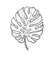 Full leaf of monstera palm tree sketch vector image vector image