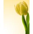 yellow tulip vector image vector image