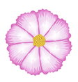 Fuchsia and White Cosmos Flower vector image
