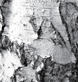 the bark birch vector image