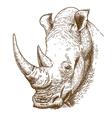 engraving rhino vector image